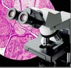 CX31 正置显微镜